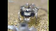 Любовен танц на паяк