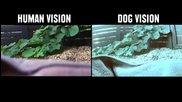 Как животните виждат света ?