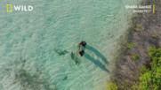 Бандите на акулите | Фестивал на акулите | NG Wild Bulgaria