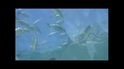 Ресторант, построен под водата - Малдиви