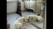 Сладко Кученце Има Близначе... В Огледало