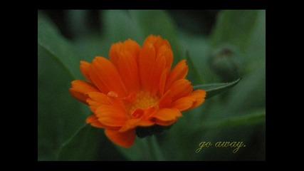 Tsp ft. Lyrics - Go Away (album Edit)