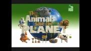 Animal Planet Животни спасяват планетата