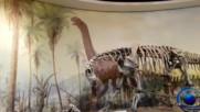Посетихме Музеят на палеонтологията