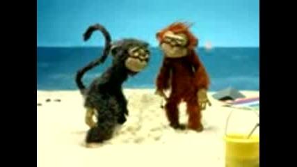Луда Маймуна