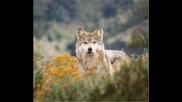 Bate Pesh0 Ft. Tina - Wolf