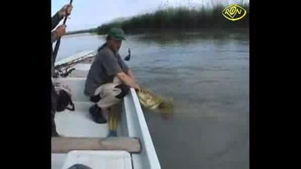 На Това Му Се Казва Голяма Риба