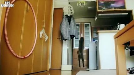 Невероятни скокове на коте- Забавен каданс