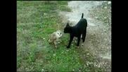 Любовта между котка и сова