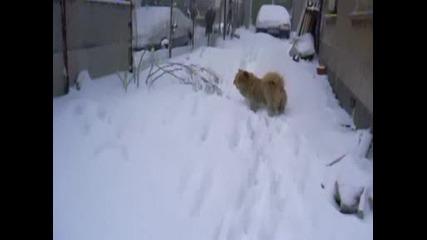 Klip4e V Snega 2.avi
