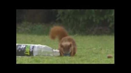 Катерица футболист - Смях!!!