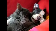 Coccole tra cane e gatto