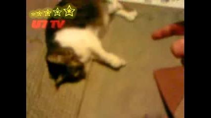 Котка Се Прави На Застреляна