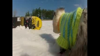 Невероятно!!опосум на snowboard