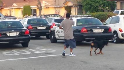 Полицай Стреля По Куче