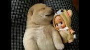 Най Сладкото Кученце На Света