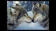 Bate Pesho - Wolf (цялата)