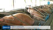 Умъртвяват животни в Ямболско заради чума