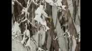 Детски песнички-врабчова зима