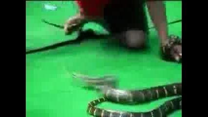 Мъж Срещу Змия