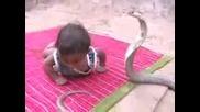 Малко идийче срещу кобра