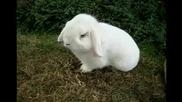 Малко бяло зайче си похапва сладко ...