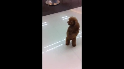 кученце танцува ,,гангнам стил'' (смях)