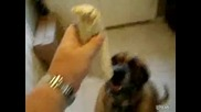 Dog_eats_bean_burrito_in_1_secon