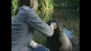 Невероятно - Жена Гледа Хипопотам В Дома Си