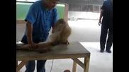 Това животно ще ви впечатли и разсмее