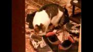 Kotka koqto obicha da se vargalq vav mrasni obuvki