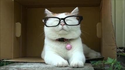 Котка с очила!.