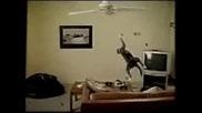 Котка На Вентилатор