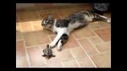 Костенурка и Котка