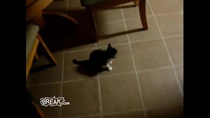 Смях! Грешен котешки скок :d Hq*