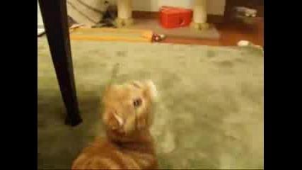 Най - Сладкото Коте, Което Съм Виждала
