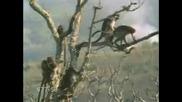 Палави Маймуни