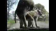 Monkey busines :)