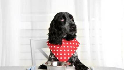 8 храни които са опасни за здравето на вашето куче