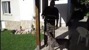 Куче яде лешници
