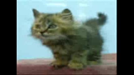 Котките Обичат Песните На Селин Дион