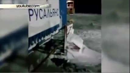 Готвач взриви полярна мечка за забавление 18+