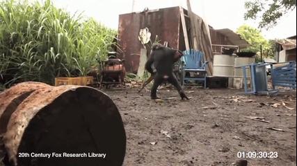 Маймуна стреля с калашник (смях)