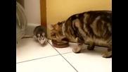 Вище как котка и мишка се карат за мляко