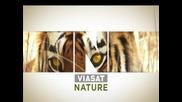 Изумителни пейзажи, неопитомени диви животни само по Viasat Nature