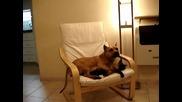 Pit Bull Rullz Dog