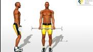 Бодибилдинг упражнения - Сгъване за бицепс с прав лост