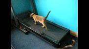 Фитнес за котки