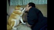 Куче не Иска Целувка от Стопанина си ... С М Я Х