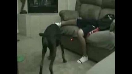 Куче и лазерче опастна комбинация